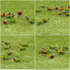 Bright Sight! Lorikeets On The Grass. 42.1/2021.